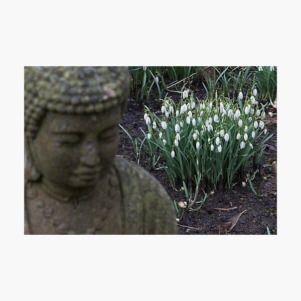 Buddha contemplates spring Photographic Print
