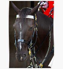 HORSE GUARD Poster