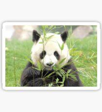 panda geant Sticker