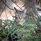 Evergreen Eyes by Mikell Herrick