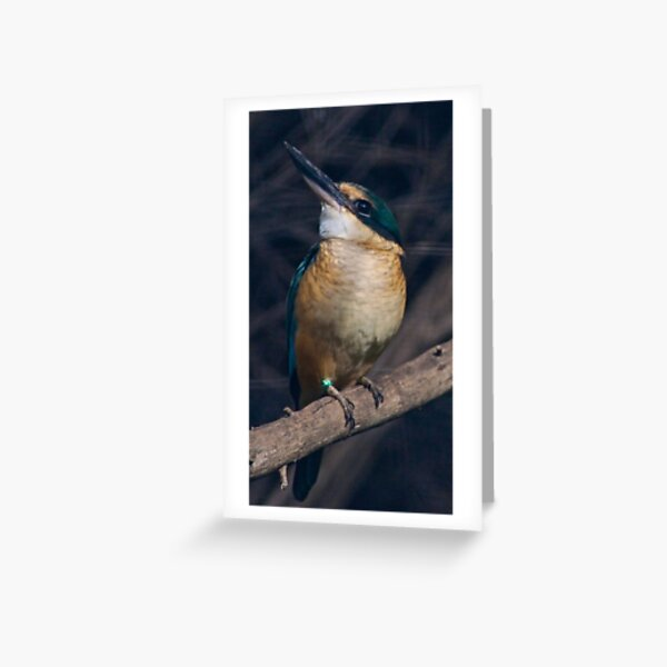 KINGFISHER ~ Azure Kingfisher 5R4EAPTW by David Irwin Greeting Card