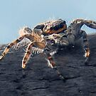 ©NS A Spider Life XA Monochrome by OmarHernandez