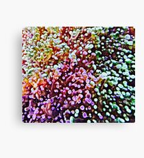Living Reef Canvas Print