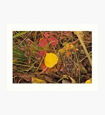 The Aspen Leaf Art Print