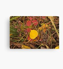 The Aspen Leaf Canvas Print