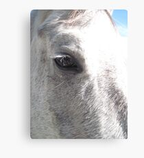 Soul of A Horse Canvas Print