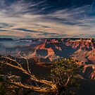 Tree Branches near The Mather Point. by Daniel H Chui