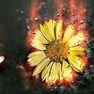 Digitally manipulated image of a white butterfly and yellow flower by PhotoStock-Isra