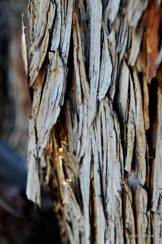 Bark by iheartdenver