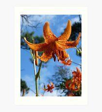 Lancifolium Splendens Art Print