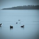 Swans - 05-04-14 by pennyswork