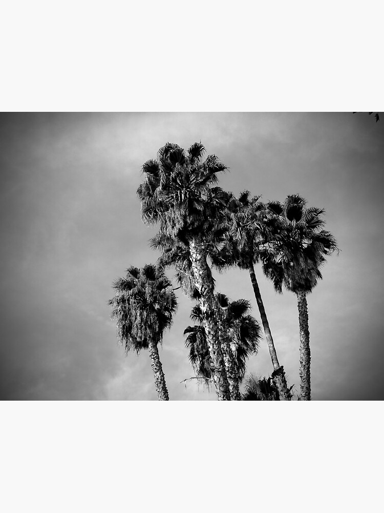 Palm Trees, Los Angeles by douglasewelch