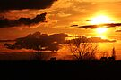 #1 Natures Hue's are Gold by Brenda Dahl
