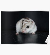 Umbriel The Hamster 2 Poster
