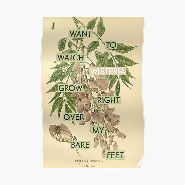 Wisteria right over my feet Poster