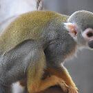 Monkey fun by Essexbeginner
