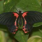 Beautiful butterfly by Essexbeginner