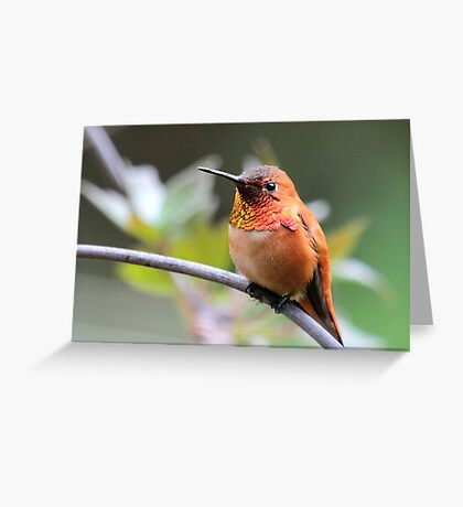 Rufous Finery Greeting Card