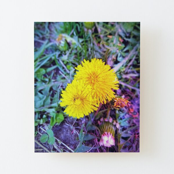 Dandelions Wood Mounted Print