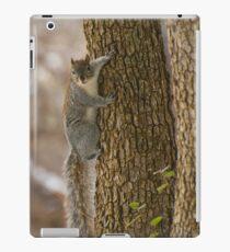 Western Grey Squirrel Climbing A Tree iPad-Hülle & Klebefolie