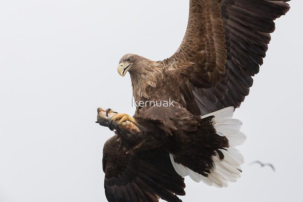 The Eagle's Catch by kernuak