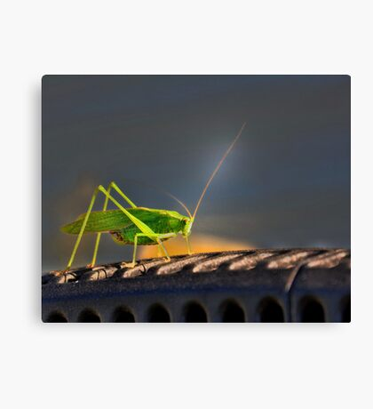Grasshopper in the spotlight Canvas Print
