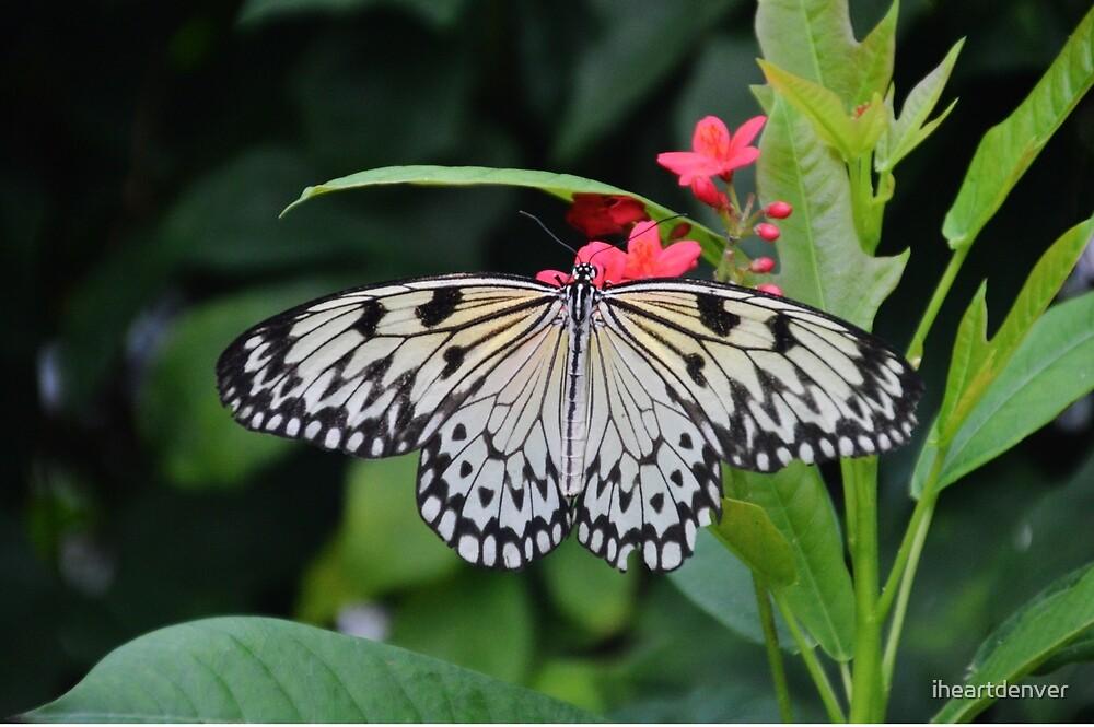 Paper Kite Butterfly by iheartdenver