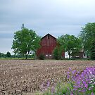 Another Grand Old Barn by Judy Seltenright