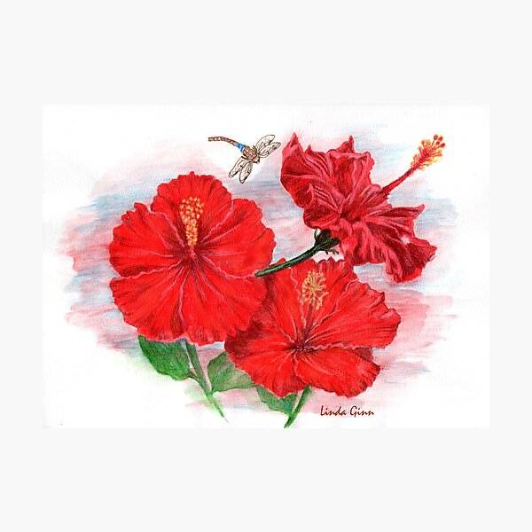 Hibiscus with Dragonfly Photographic Print
