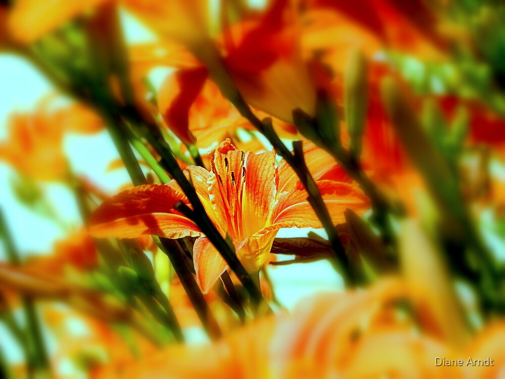 Hiding In Plain Sight by Diane Arndt