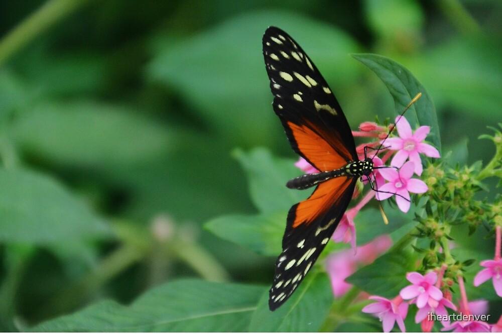 Pteronymia Butterfly by iheartdenver
