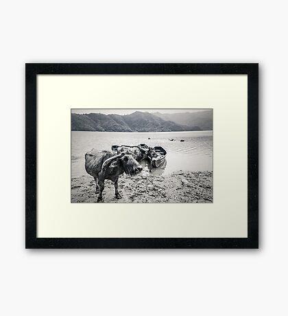Water Boys Framed Print