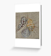 Shells By Coralie Newman Greeting Card