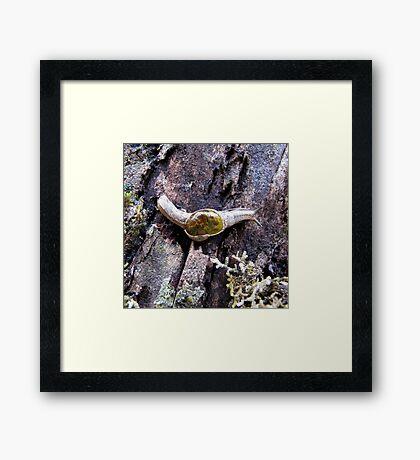 Rainforest No.1 Framed Print