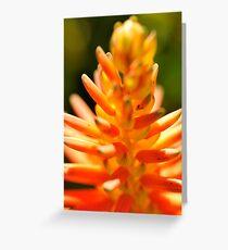Flowers Flowers Flowers Greeting Card