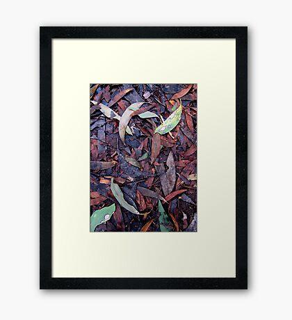 Rainforest No.3 Framed Print