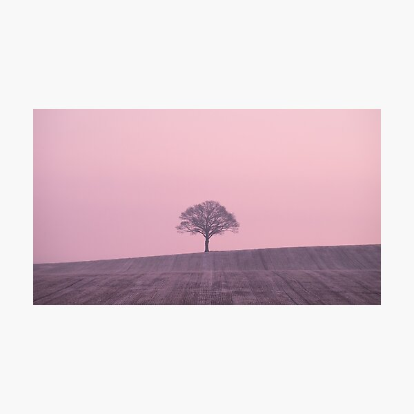 One Pink Tree Hill Photographic Print