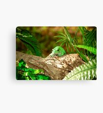 Green Tree Frog Leinwanddruck