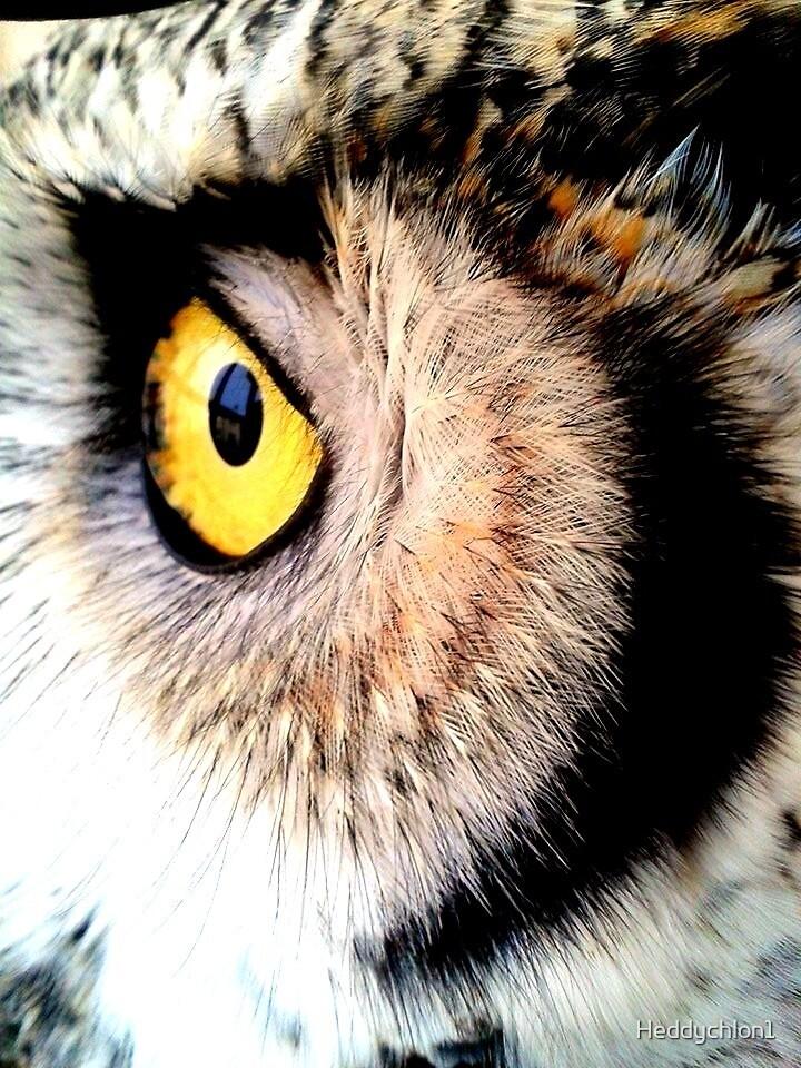 Canadian Great Horned Owl by Heddychlon1