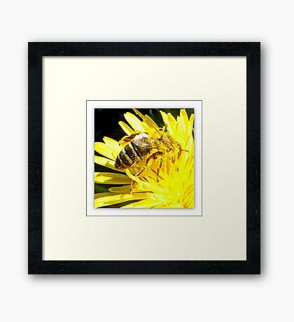 Pollinated Honeybee Framed Print