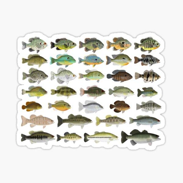 Sunfish Family Sticker