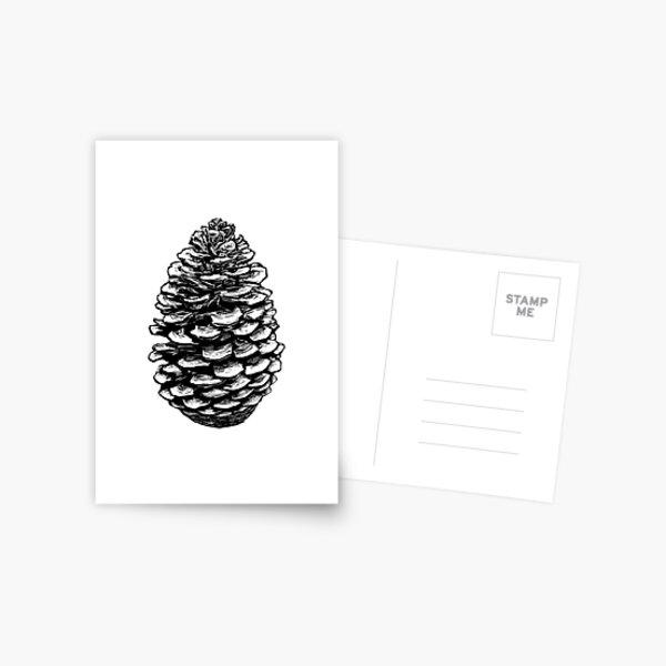 Pine Cone Black Postcard