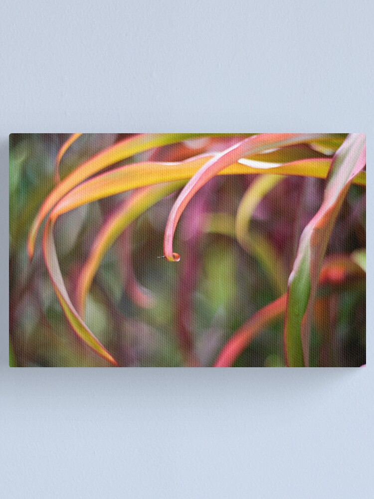 Alternate view of The curl Canvas Print