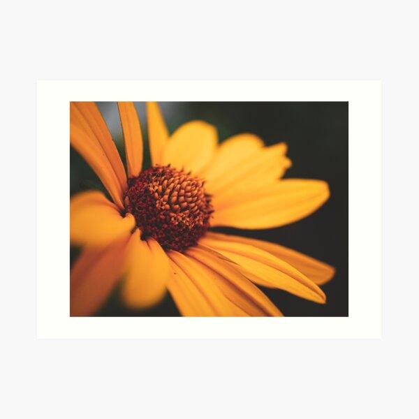 False Sunflower Art Print