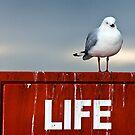 Life by DaveBassett