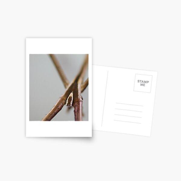 Netcaster Postcard