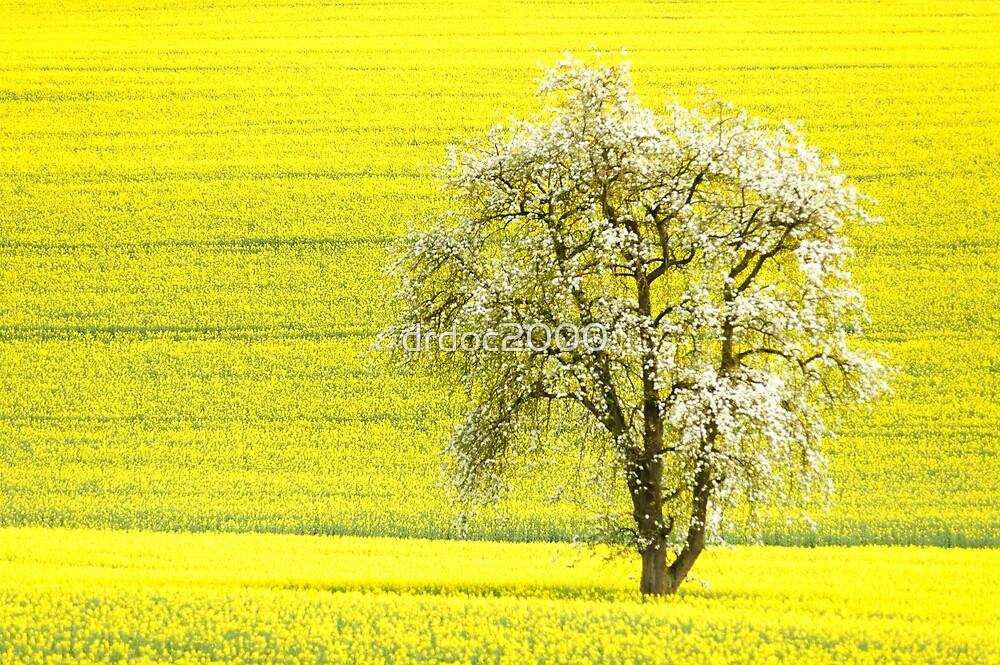 rape yellow sky blue by drdoc2000