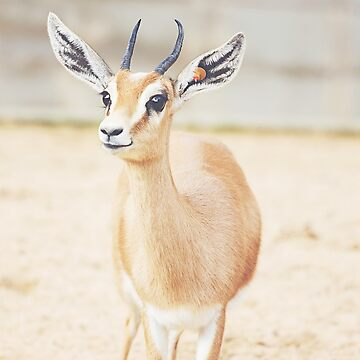 Dorcas Gazelle by PatiDesigns