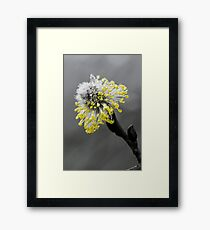 Pop-Colour Flower Framed Print