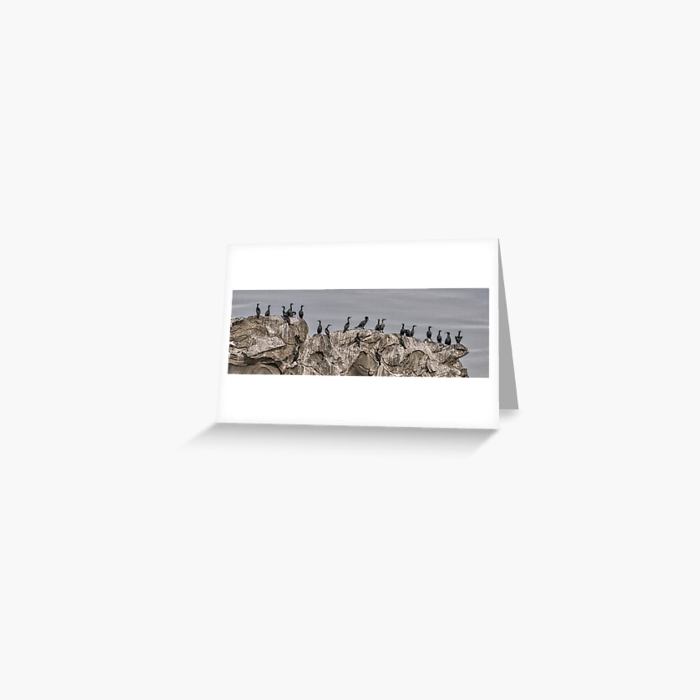 Cormorants on the Belle Chain. Greeting Card